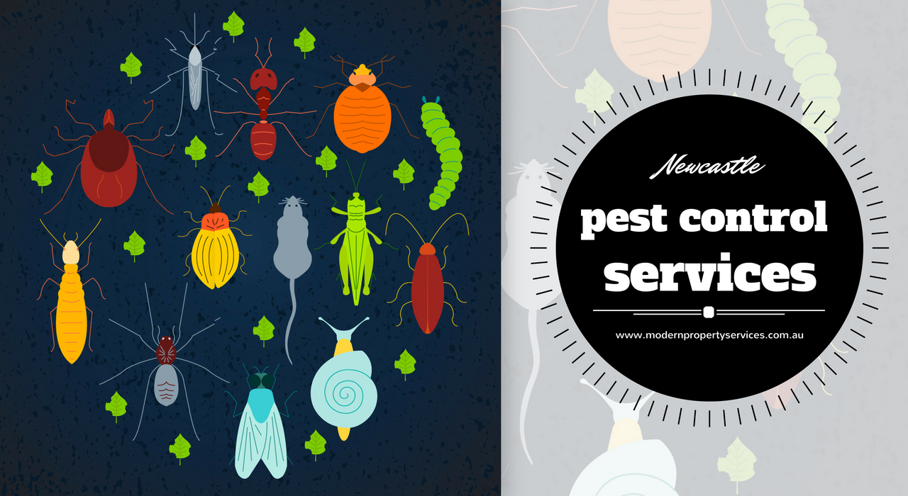 newcastle-pest-control-services